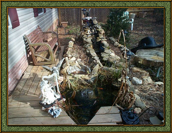 Final the goldfish pond for Pond plants that survive winter